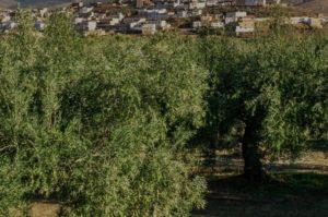 Casa Rural Cordoba - Casa Rural La Jarilla