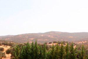 Casas Rurales en Córdoba y Provincia - Casa Rural La Jarilla